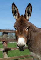 burro-internet