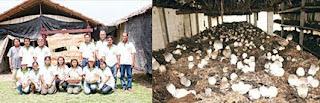 กลุ่มวิสาหกิจชุมชนเห็ดและผักปลอดสารพิษ และเรือนเพาะเห็ดฟาง