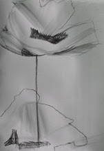 Poppies- sketch