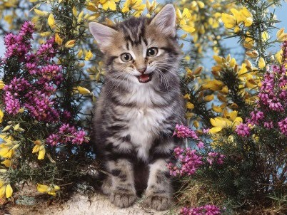 Animals love flowers