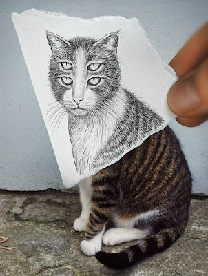 Scary cat optical illusion
