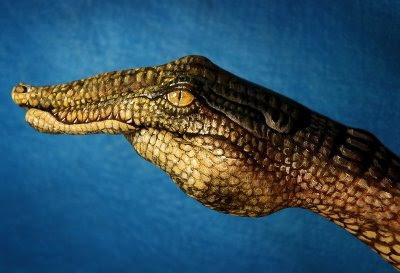 Snake Illusion | Crocodile Illusion | Hidden Animal Illusion