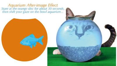 Aquarium after image effect illusion, Fish and cat optical illusion