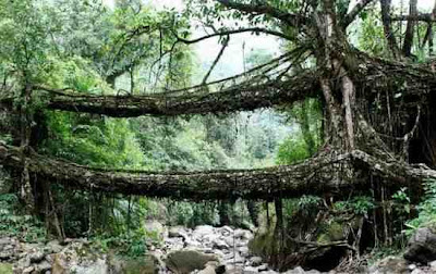 Jembatan Hidup Di India