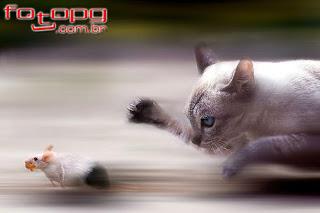 A SOLUÇÃO É MARTELO E BIGORNA Gato+cacando