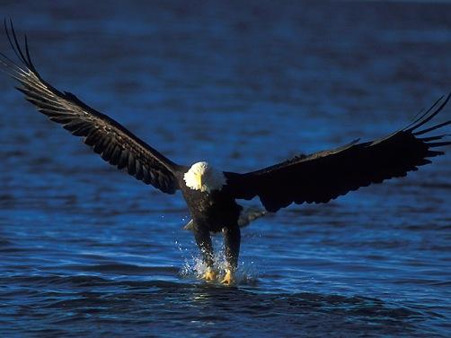 "Tus Reflexiones Cristianas"" McPuga: El Aguila"