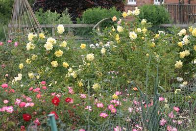 Rosas Flores de interior Flores - Rocket Farms