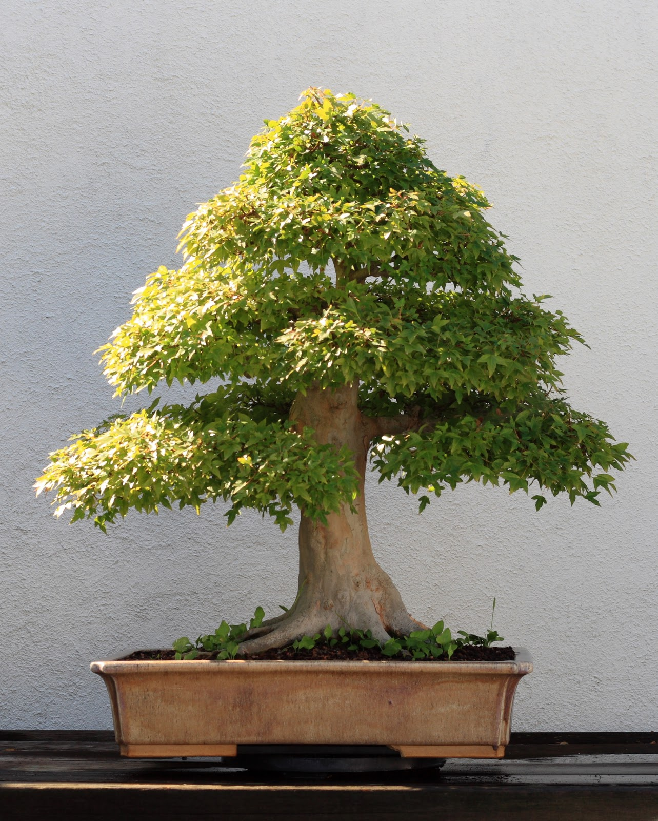 Talus Slopes Bonsai Tree Photos