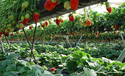 Descarga ebooks gratis sobre hidroponia fresas hidroponicas for Imagenes de hidroponia