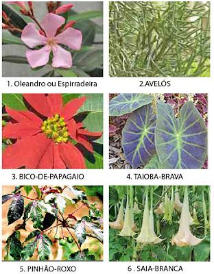 Entre tantas besteiras 16 plantas que mais causam - Plantas venenosas de interior ...