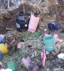 tres soldados y un civil recogen coca en maceración en una de los muchos