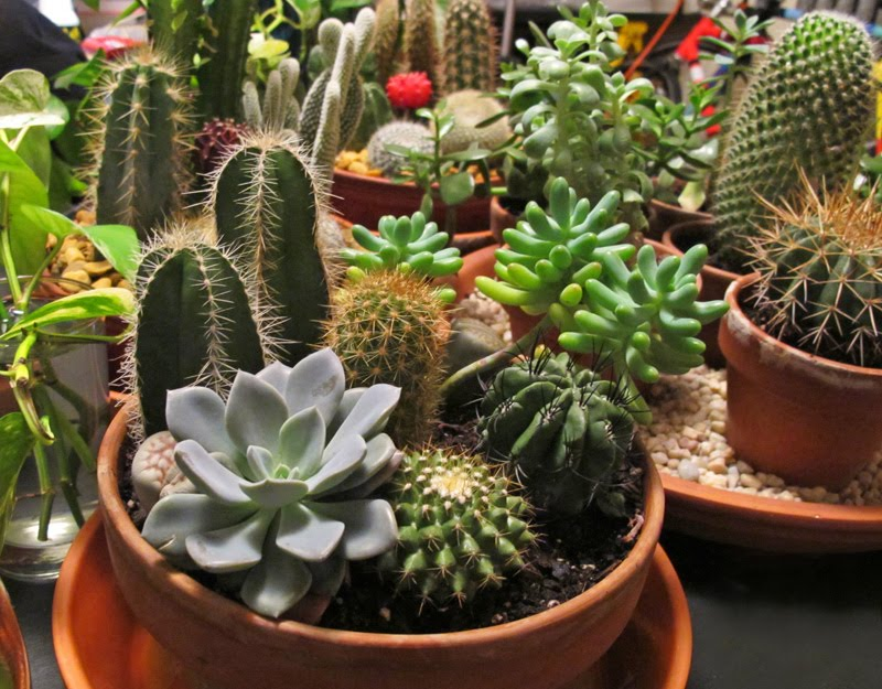 cactus garden gardening forums. Black Bedroom Furniture Sets. Home Design Ideas