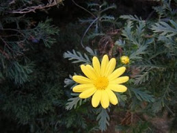 La calidez de una flor
