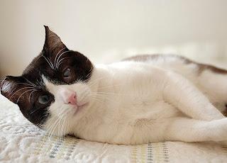 gato maltratado
