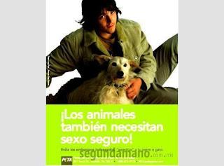 esterilización animales