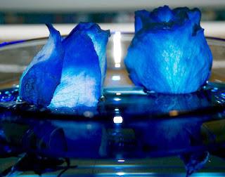 http://2.bp.blogspot.com/_-gcL8iXJ8Nk/TDua8ytt21I/AAAAAAAAADA/YWD4ls_uLug/s1600/rosas-azules.jpg