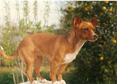 Schieffer, a nossa primeira cadelita...