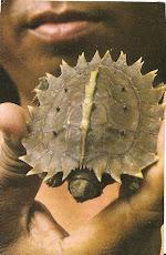 Tartaruga diferente