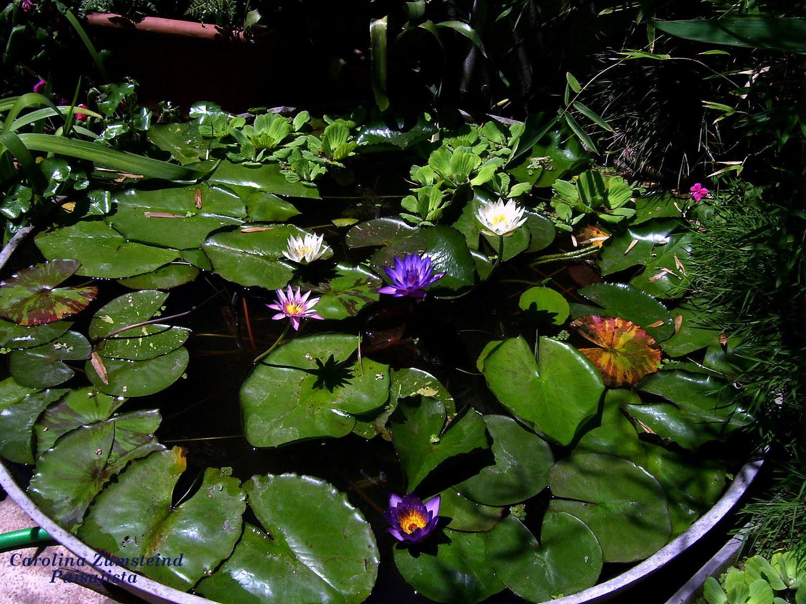 Indigo estanques para todos los gustos y necesidades for Estanques para jardin