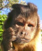 ricky monkey