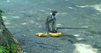 southwick monkey