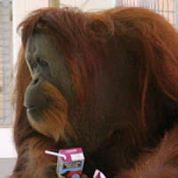katy ape