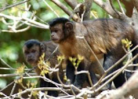 primates giving