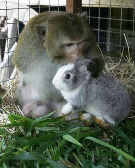 monkey and rabbit