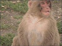 monkey escaped