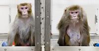 monkeys aging