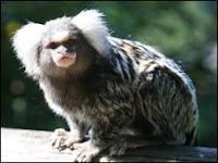 monkey missing
