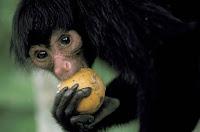 monkeys climate