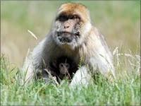 monkey birth strangeface
