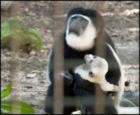 monkey born