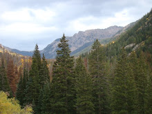 A view from the trail