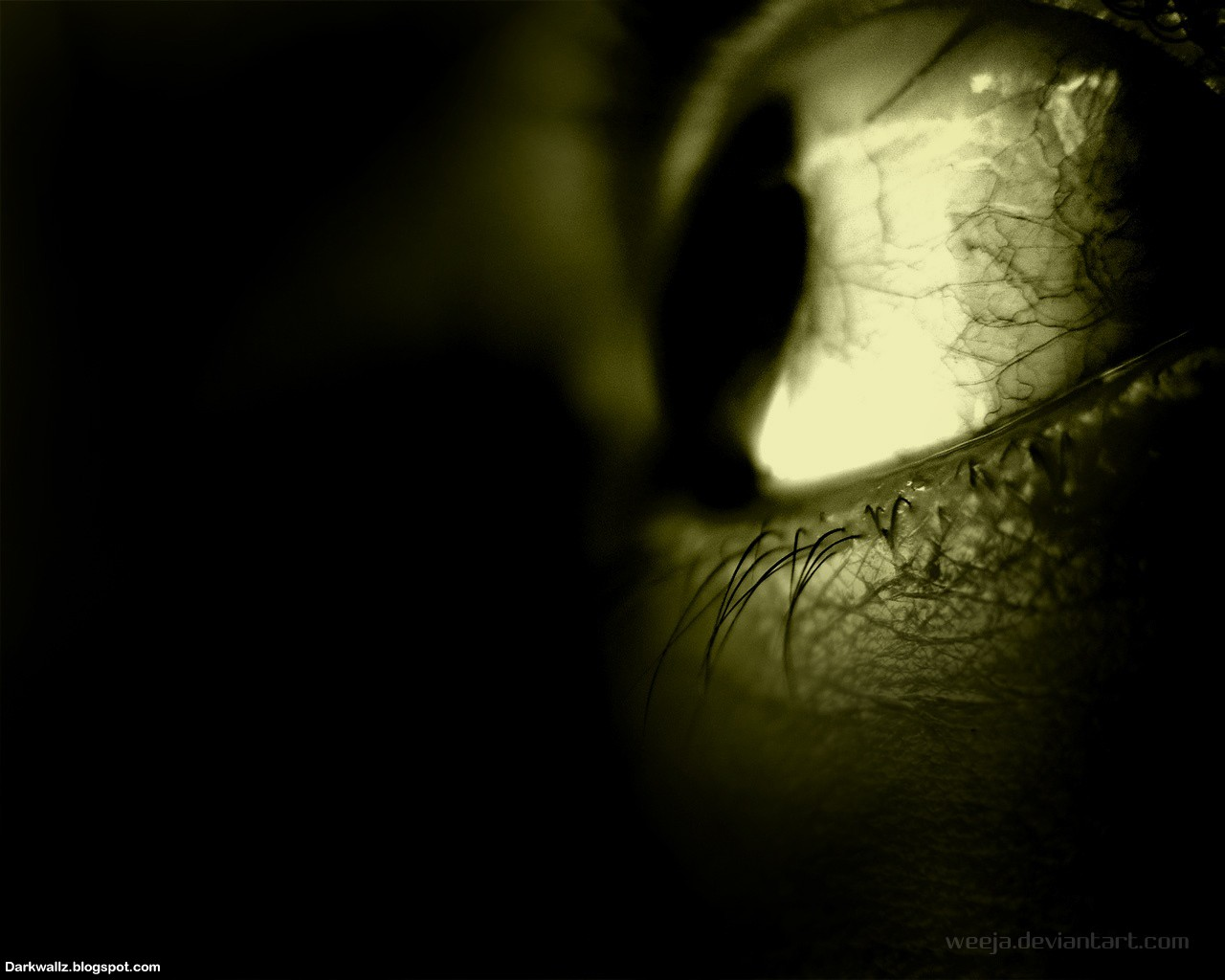 Scary Eyes Wallpapers  52| Dark Wallpaper Download