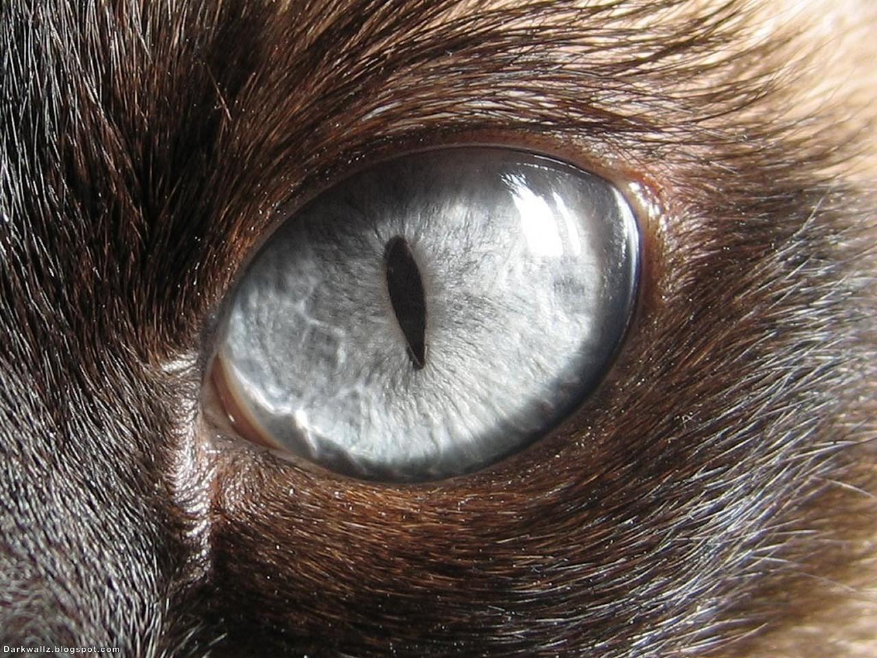 Scary Eyes Wallpapers 74 | Dark Wallpaper Download