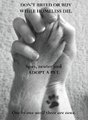 Adopt a Pet