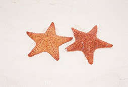 Star Fish on a Sand Bar