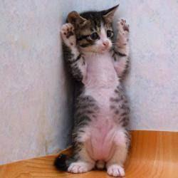 comel gila kucing ni..huhu..