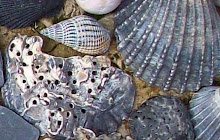 pierre et coquille