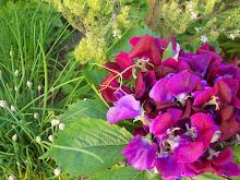 bouquet de senteurs