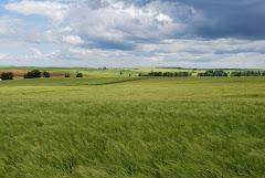 Primavera en Moratinos