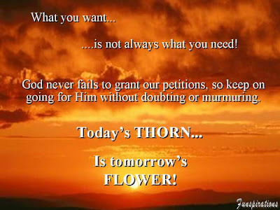 7 - Today's Thorn is Tommarow's Flower