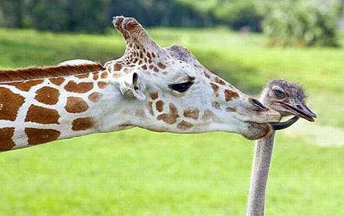 Cute+Animals+Best+Friends - Best Friends  - General Topic