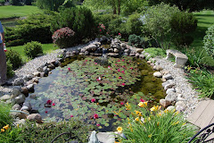 Cledith's Beautiful Pond