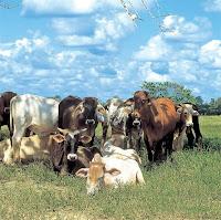 compra y venta de ganado