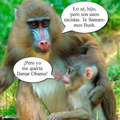 Mandril Obama