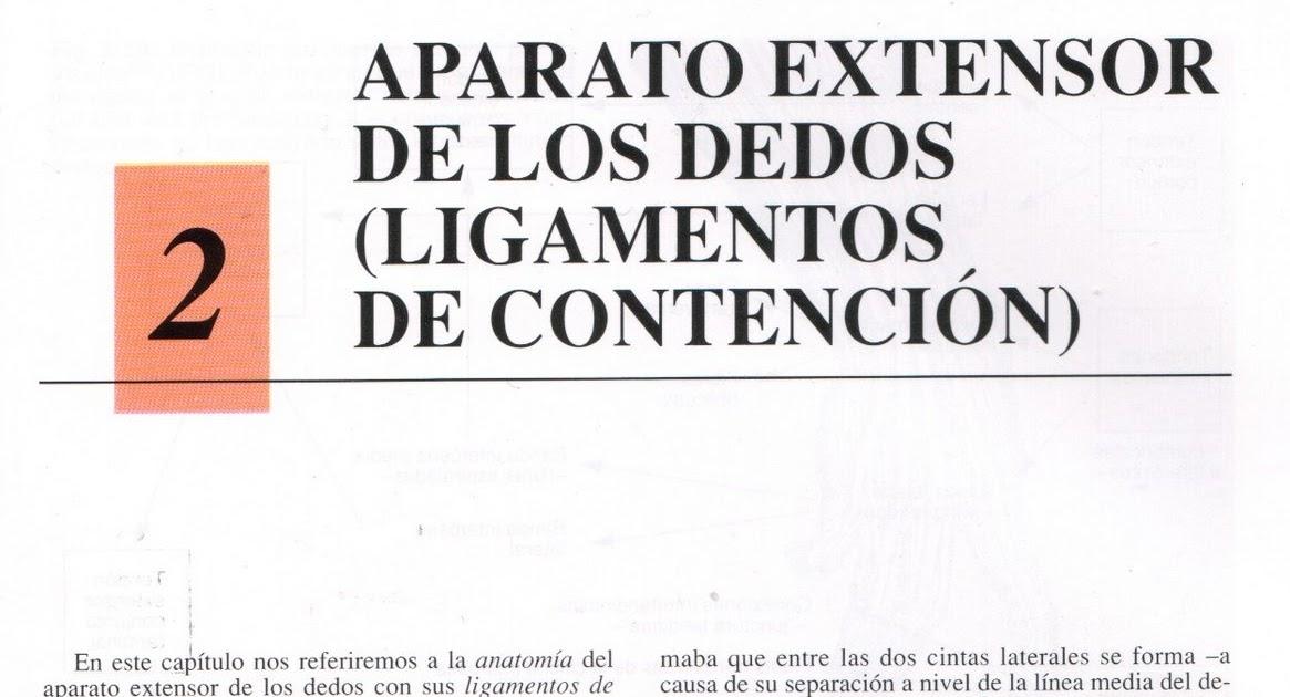 Área de Disección y Materiales: APARATO EXTENSOR DE LOS DEDOS ...