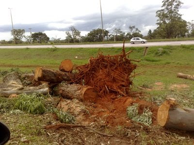 Micro-Storm Knocks Over 50 Trees in Brasilia!